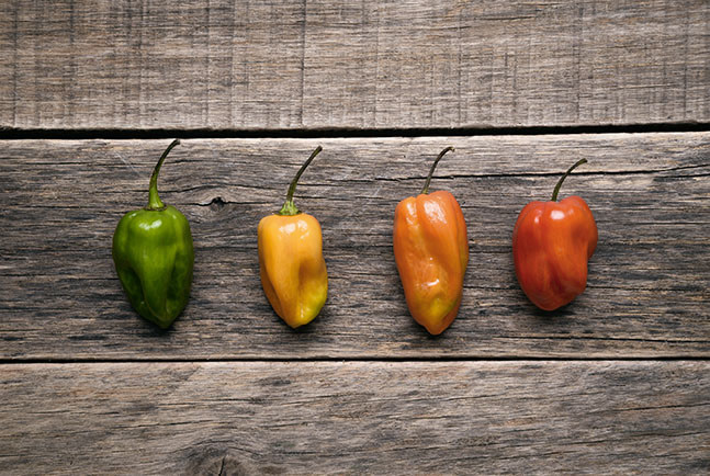 Learn About Habaneros