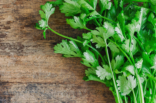 Learn About Cilantro
